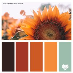 One of the most beautiful things on the planet is when the trees change in Michigan… Fall Color Schemes, Color Schemes Colour Palettes, Fall Color Palette, Colour Pallette, Color Palate, Color Combos, Orange Color Schemes, Sunflower Colors, Orange Color Palettes