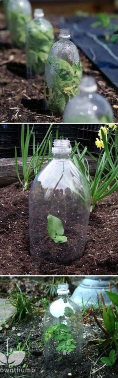 Plastic bottle mini greenhouse - homedecoriez.comhomedecoriez.com