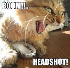 Boom Headshot Cat | Pictures and Photos by TensionNOT.com