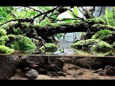 VideoTuto - Layout rain forest natural mini for paludarium - Aquascaping Aquarium Terrarium, Planted Aquarium, Fish Tank Terrarium, Terrarium Reptile, Garden Terrarium, Aquarium Fish Tank, Terrarium Centerpiece, Aquascaping, Aquarium Landscape