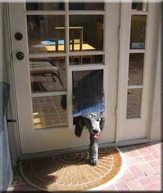 MaxSeal turn a glass pane into a doggie door...I need something like this..My door is identicle (minus the doggie door!)
