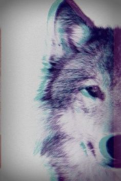 The wolf does not fear, and nor shall I. I shall step outside my comfort zone to adventure. The Wolf would.