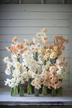 Flower-farmer Erin Benzakein's beautiful and instructive book is a must for budding florists Spring Blooms, Spring Flowers, Pansies, Daffodils, Tulips, Flower Farmer, Most Beautiful Flowers, Pretty Flowers, Cut Flowers