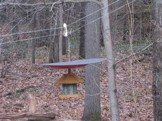 the defeeder make your hanging bird feeder squirrel proof, crafts, outdoor living, pets animals