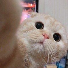 Im single okay😒. Cute Baby Cats, Cute Cats And Kittens, Cute Funny Animals, Cute Baby Animals, I Love Cats, Kittens Cutest, Cute Dogs, Cute Cat Memes, Cute Cat Wallpaper