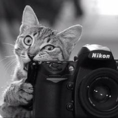 My photo assistant is tough on my cameras! #cats
