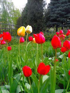 Spring 2016 in Penza, Russia.