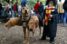 Harry Potter and Fluffy the 3 headed dog!-26 Of The Best Kids' Halloween Costumes Ever | Bored Panda