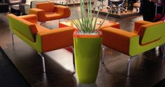 Quadik Plus planter in lime green and orange with Sansevieria Royal Crown