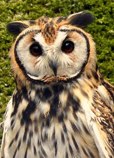 I love this adorable owl!