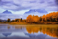 Fall colored trees with cloud covered Mount Moran in the background