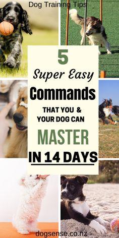 Dog Commands, What Kind Of Dog, Dog Training Techniques, Best Dog Training, Dog Runs, Dog Agility, Old Dogs, Happy Dogs, Dog Walking