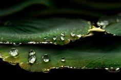 ...morning dew... by SAMLIM