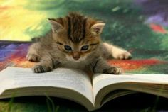 Adorable Kitten Gaining a Little Knowledge.