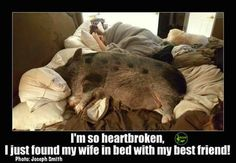 Just for fun-pig pictures and meme's - Mini Pig Info