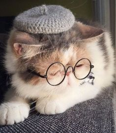 Meet Buona, the two-year-old Japanese shorthair cat. She's Insta-famous, and it's not just because she's adorable—this kitty has a serious sense of style. Cute Cats Photos, Cute Animal Photos, Funny Animal Pictures, Cute Funny Animals, Cute Baby Animals, Cute Baby Cats, Cute Cats And Kittens, Cool Cats, Kittens Cutest