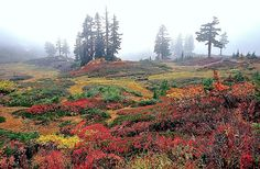 MHeather Meadows, Washington Cascades