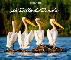 Danube Delta, High Quality Images, Free Images, Green, Us National Parks, Romania, Tourism