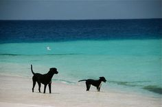 Friendly dogs at Madriski Island, at Los Roques in Venezuela