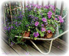 wheelbarrow plantings on our back deck