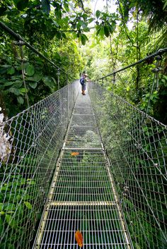Bridge in Costa Rica