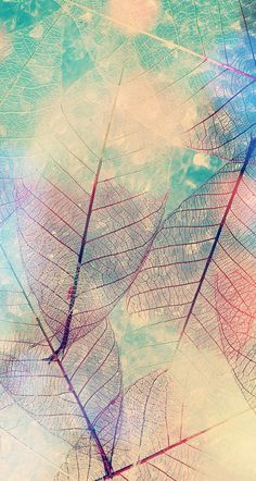 Imagem de leaves and wallpaper