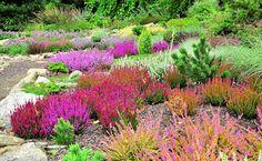 Obraz: Aranzacje ogrodów - ogrody zdjęcia, ogród - e-ogrody.pl