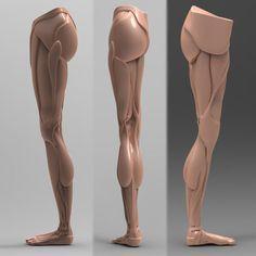 leg anatomy - Google Search