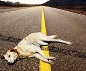 iGiuseppe Bresciani, libero pensatore: Chi abbandona il suo cane è tre volte miserabile