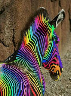 This is a rainbow horse. I mean this is a rainbow zebra. I like any type of zebra. Including this one. Do you see the colors on his face? The blue on his coat is dark blue. Rainbow Zebra, Love Rainbow, Taste The Rainbow, Over The Rainbow, Rainbow Stuff, Rainbow Sherbet, Rainbow Nails, Rainbow Dash, Rainbow Things