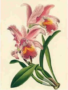 http://vintagebotanicals.blogspot.com/2012/01/some-very-attractive-vintage-flower.html