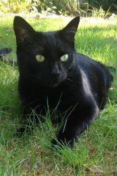 My Karencat x