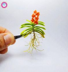 Mini Orchid flowers for rooms perennial indoor flowers for home and garden potted flowers Phalaenopsis Miniature Orchids, Miniature Plants, Clay Flowers, Flower Pots, Indoor Flowers, Potted Flowers, Orchid Flowers, Mini Orquideas, Vanda Orchids
