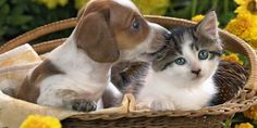 Animal Dog And Kittens Images Wallpaper HD Background