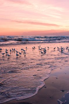 Via natureac http://natureac.tumblr.com/post/131143448403