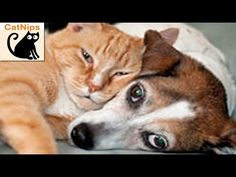 The Cat Tries To Wake Up The Dog. But What Follows Has Me Laughing Out Loud! The cat tries and tries to wake up her dog friend, but she fails in the most adorable way. At least they get to cuddle together at the end!