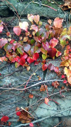 Autumnal layers III. Photo credit: Paola De Giovanni