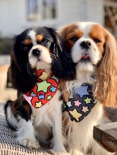 Cute Baby Puppies, Teacup Puppies, Cute Baby Animals, Cute Dogs, Dogs And Puppies, Cavalier King Charles Dog, King Charles Spaniel, Spaniel Puppies, Cute Creatures