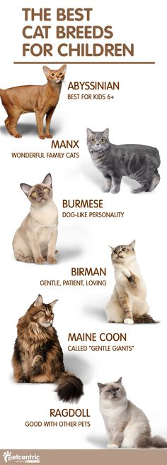 Find the purrfect addition to your family with one of these variety of cat breeds. www.PurrLux.com
