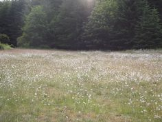 Meadow in Forks, Washington. Yes, I realize I am lame since I only want to go there because of Twilight <3