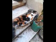Mommy cat Running After Big Mice Cat Work, Mother Cat, Mice, Running, Cats, Animals, Racing, Gatos, Animales