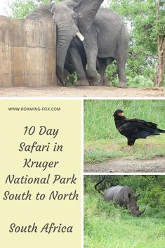 Road trip through Kruger National Park - 10 day safari #safari #KrugerNationalPark #roadtrip #SouthAfrica #selfdrive #caravan #camping #wildlife #nationalpark #sanparks Kruger National Park, National Parks, Elephants Photos, Self Driving, Photo Essay, Africa Travel, Travel Goals, Travel Around The World, Motorhome