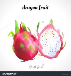 Watercolor Dragon Fruit . Provencal Style. Recent Watercolor Paintings Of Organic Food. Fresh Exotic Fruit. Stock Vector Illustration 217130401 : Shutterstock
