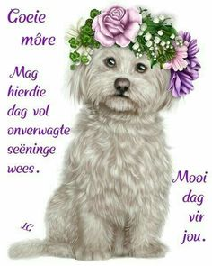 Morning Blessings, Good Morning Wishes, Good Morning Quotes, Lekker Dag, Evening Greetings, Goeie More, Afrikaans Quotes, Puppy Images, Morning Greetings Quotes