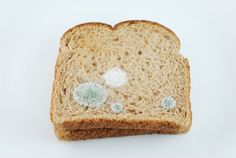 WOW. That is embroidery on the bread, not mold! Toast Embroidery #3: Mold 1, from Judith G. Klausner.
