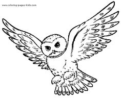 Flying Owl Template Coloring Pages Mehr
