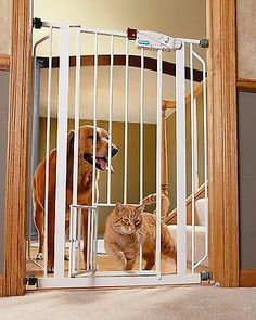 Pet Gates With Door Cat Dog Extra Wide Walk Thru Tall Steel Expandable Baby  Home