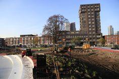 #Tkmstbeeld 12: de planten en struiken zitten in de grond en de eerste lijnen zijn op de playground aangebracht!