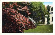 Azaleas and W. J. DeRenne Georgia Library, Wormsloe Gardens, Savannah Ga.