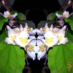 "Tauch ein in die Anderswelt ""Jasminblüten Geist"" kreativesbypetra Petra, Plants, Plant, Planets"